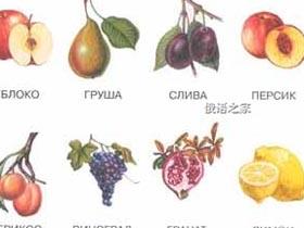 常用的俄语水果词汇