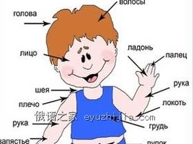 入门学习 下图中身体各部位用俄语怎么说