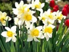 一些常见鲜花植物的俄语名称